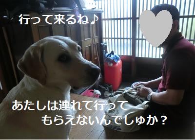 飼い主を見送る犬