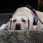 犬連れ鎌倉散策|源氏山から北鎌倉へ 源氏山公園・建長寺