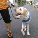 犬へのコマンドは命令というよりコミュニケーションになっている