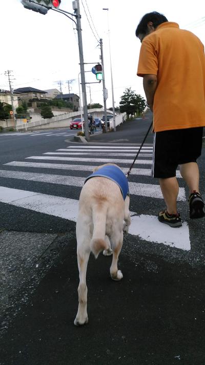 横断歩道を渡る犬