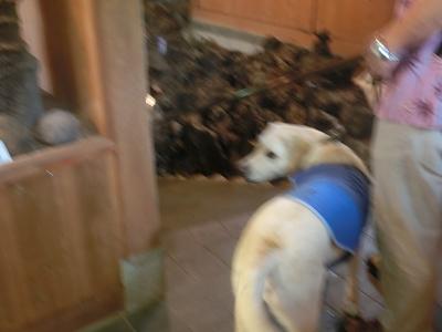 溶岩樹型と犬