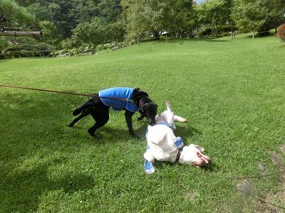 芝生で遊ぶ犬