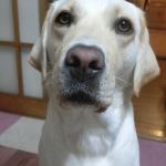 元気すぎる犬に落ち着くことを教えるには座って待つことを教える(練習中)