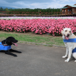 花の都公園立札と犬