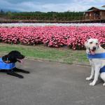 犬と楽しむ山中湖花の都公園