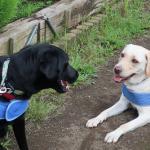 富士大石ハナテラスで犬と一緒にゆったり過ごそう