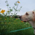 犬が大好き過ぎてお散歩で他犬に突進しちゃうんです