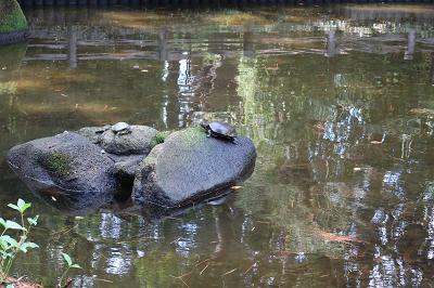 弁天池の亀
