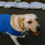 犬が怖いのでお散歩で他犬に会うと吠えちゃうんです