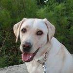犬は可愛いけどお散歩は面倒?犬との散歩を楽しむ工夫