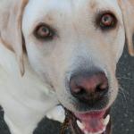 愛されている犬は見た目で判断できる
