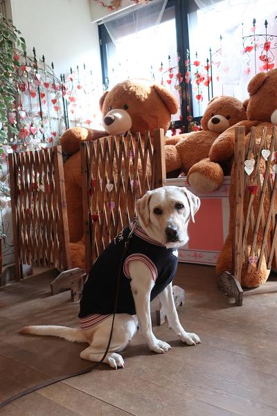 テディーと犬