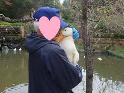 アヒルを抱く飼育員