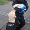 挨拶するアヒルと犬