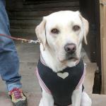 犬も寒暖差で体調を崩す 季節の変わり目は体調管理に気をつけよう