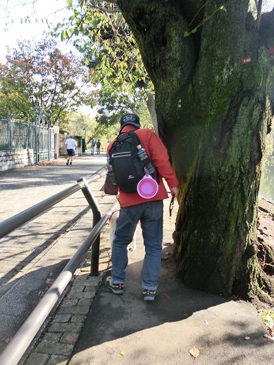 歩道にはみ出す木
