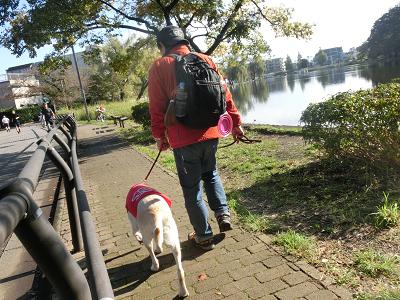歩道を散歩する犬