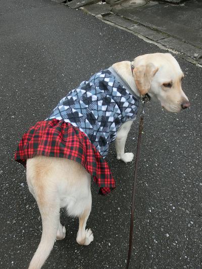 散歩に行く妊婦犬