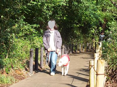 石神井公園の木道