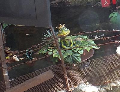 蛙仙人アップ