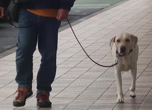 のんびり歩く犬
