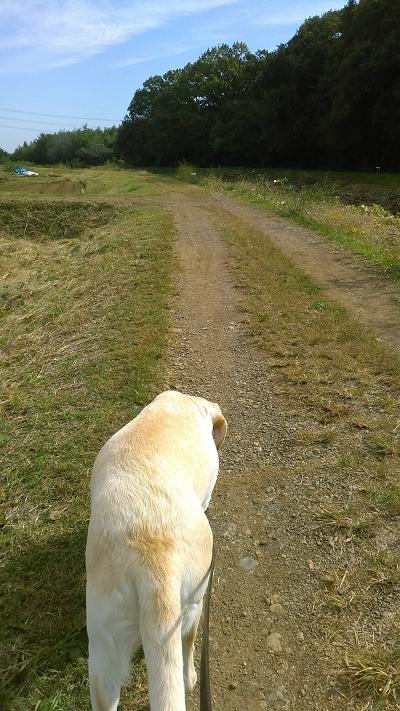 土手を散歩する犬