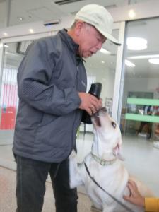多和田氏に遊んでもらいたい犬