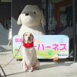 富士ハーネスの入り口に座る犬