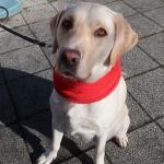 犬が嫌いな音と好きな音 音に敏感な犬との暮らし