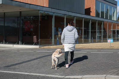 訓練士と建物へ向かう犬