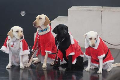 サンタ服のPR犬たち