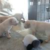 子犬生後1か月