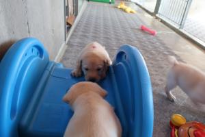 滑り台に上る子犬