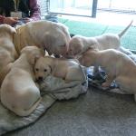 子犬の生後6~7週は犬社会から人社会へ旅立つ大切な準備期
