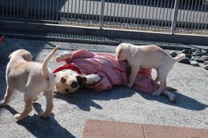一緒に遊ぶ母犬と子犬
