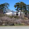 梅と小田原城