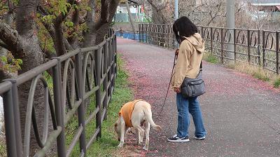 のんびりお散歩