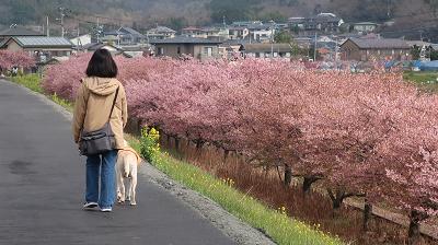 柿沢川の土手犬の散歩