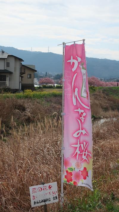かんなみの桜登旗