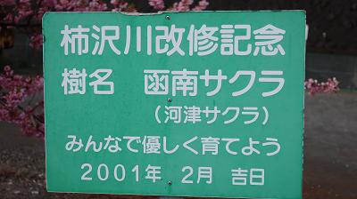 函南サクラ立て札