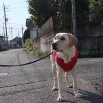 犬の足腰が弱くなる原因と足腰の鍛え方