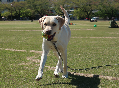 ボール遊びをする犬