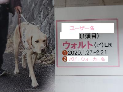 盲導犬くらぶに掲載されたウォルト