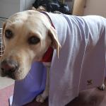 シャンプー後の時短を叶える犬用マイクロファイバータオルと高吸収厚手タオル