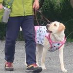 犬のフンを家の前に放置されて大迷惑!効果的な撃退法は?
