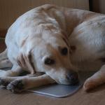吠え方で分かる犬の気持ち|吠え癖をつけないためには?