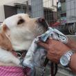 顔を拭かれる犬