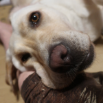 メス犬が発情出血の後に少量の出血!考えられる病気と対策は?