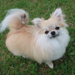 ドッグランは犬の社会化の役に立つ?ドッグランのメリットとデメリット