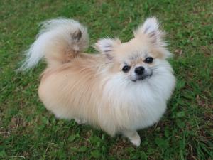 可愛い小型犬